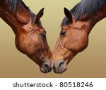 Horse couple in love - stock photo