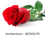 Stock photo red rose bud isolated on white background 80540170