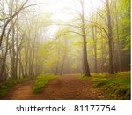 A Green Forest In Spring...