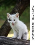 White Kitten Sitting On The...
