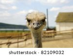 A nice shot of Ostrich glance - stock photo