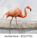 The Single Pink Flamingo In Zoo