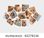 Stock photo funny orange cat collage of photos for your design 82278136