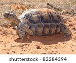 Desert Tortoise  Gopherus...