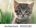 Stock photo kitten on grass close up 82322182