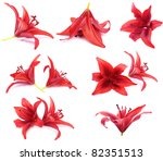 Red Lilies Isolated On White