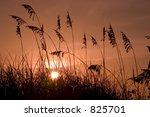 seagrass | Shutterstock . vector #825701