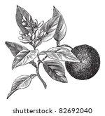 sweet orange or citrus... | Shutterstock .eps vector #82692040