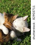 Stock photo mother cat and her kitten playing 82903711