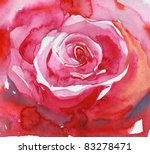 Big Red Rose . Watercolor