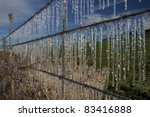 Ice Hangs From Barb Wire Fence...