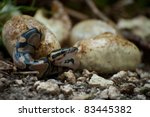 Pythons Hatching In Everglades