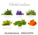 Herbal Medicine: chamomile, lavender, calendula, celandine and St. John's wort isolated - stock photo