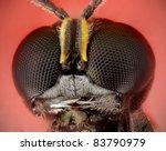 Ectemnius Wasp