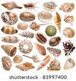 seashell collection isolated on ... | Shutterstock . vector #83997400