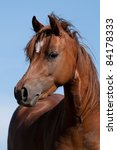 Portrait Of Nice Pony Mare