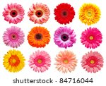 Stock photo gerber flowers isolated on white background 84716044