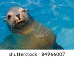 Winking California Sea Lion...