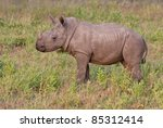Постер, плакат: Rhino calf in