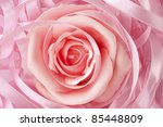 Pink rose and ribbon decoration - stock photo