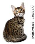 kitten of the metis breed  ...   Shutterstock . vector #85537477