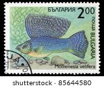 Small photo of BULGARIA - CIRCA 1993: A stamp printed in Bulgaria shows Mollienesia velifera, circa 1993
