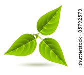 three green leaves on white... | Shutterstock . vector #85792573
