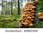Wild Mushroom On Mossy Trunk I...