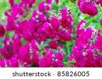 Roses On A Bush In A Garden