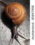 Snail Moving On Rough Surface