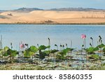 Lotus Lake In Mui Ne