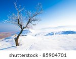 Tree in winter landscape with snow - stock photo