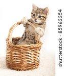 Stock photo little kitten 85963354