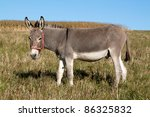 Grey donkey in the pasture - stock photo