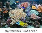 a tropical fishes and anemone... | Shutterstock . vector #86557057
