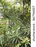Small photo of full frame natural background showing leavy exotic vegetation