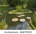 Sunny Illuminated Pond With...