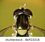 Injured hoverfly overhead closeup - stock photo