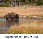 Bison In River During Fall In...