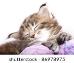 Stock photo kitten sleeping resting in a basket of balls of yarn 86978975
