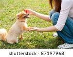 Beautiful Asian Woman With Dog...