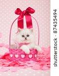 Stock photo silver chinchilla kitten inside valentine pink basket with flower petals 87435494