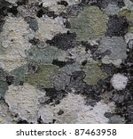 Small photo of Red Alder Wood Bark Texture Alnus rubra