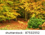 Autumn Fall Forest With Vivid...