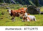 alpen cows   Shutterstock . vector #87712975