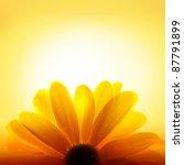 Macro Shot Of Sunflower With...