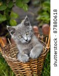 Stock photo small funny kitten sitting in a basket in summer day 87880618