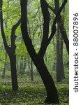 rainforest   Shutterstock . vector #88007896