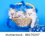 Three kittens in a basket with Christmas ornaments on a blue background. - stock photo