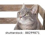 Stock photo cute cat in a box 88299871